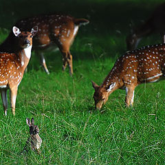"""фото """"Guarding rabbit"""""""