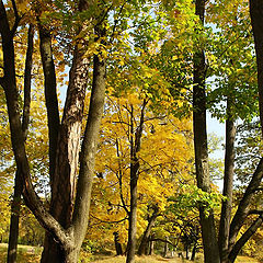"""photo """"Golden Autumn in Pushkin"""""""