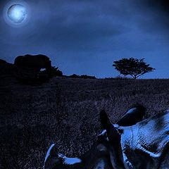 "photo ""Serengeti.Rhinoceros and Moon..."""