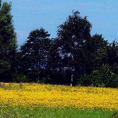 "photo ""Wild Flower Meadow"""