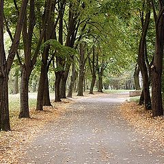"фото ""Autumn is here"""