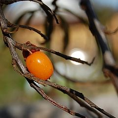 """photo """"Последняя ягодка..."""""""