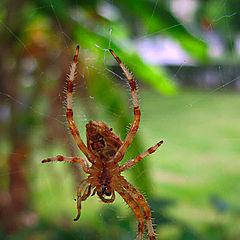 "photo ""The spider"""