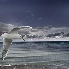 "photo ""secrets of the sea"""