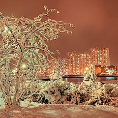 """фото """"Ночные прогулки"""""""