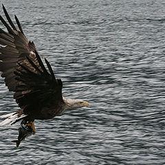 "фото ""Eagle 1"""