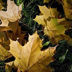 "фото ""Под ногами осень..."""