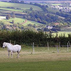 "photo ""Fairy tale about a sad white  horse."""