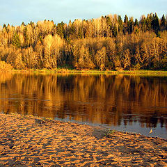 "фото ""Оранжевый лес."""
