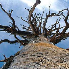 "фото ""Dead tree"""