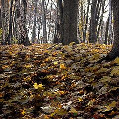 """фото """"По лесу..."""""""
