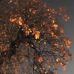 """фото """"Golden Tree"""""""
