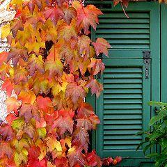 """фото """"colours of season"""""""