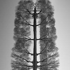 "photo ""Big TREE))"""