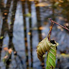 """photo """"Broken twig"""""""