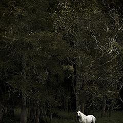 "фото ""Fairy tale"""