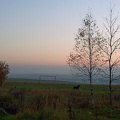 """фото """"Светлый закат с тёмной собакой"""""""