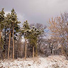 """фото """"Первый снег..."""""""