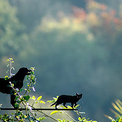 "фото ""Cat n Bear ..."""