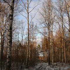 "фото ""Осенний лес в закатном свете."""