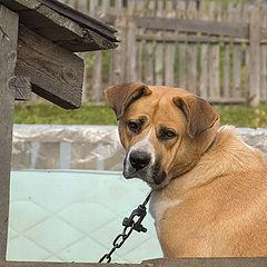 """фото """"Осторожно! Добрая собака!"""""""