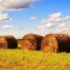 "photo ""Rolls of Hay"""