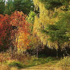 """photo """"Easy Autumn Palette"""""""