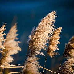 """photo """"Wind In The Weeds"""""""