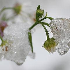 "фото ""После первого снега"""
