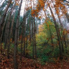 """photo """"Autumn Invasion"""""""