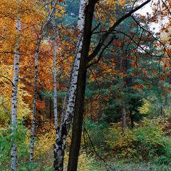 "photo ""A palette of autumn"""