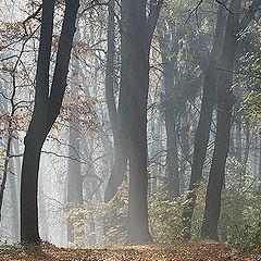 "фото ""Таинственный лес (Осенний марафон - 6)"""