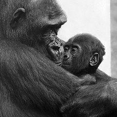 """фото """"30651 Mothers love II"""""""