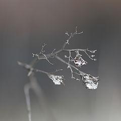 "фото ""В объятиях у зимы"""