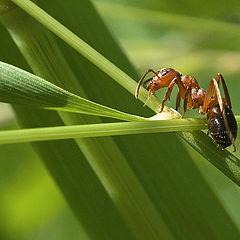 """photo """"Ant"""""""