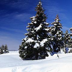 """фото """"Snow!"""""""