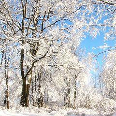 """фото """"зима пришла!"""""""