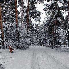 "photo ""A threshold Winter"""