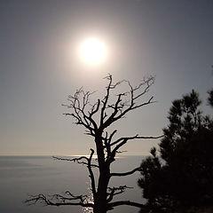 "фото ""Старое дерево и полная луна."""