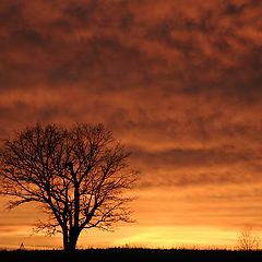 """фото """"... november sunset"""""""