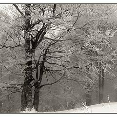 """album """"nature"""""""