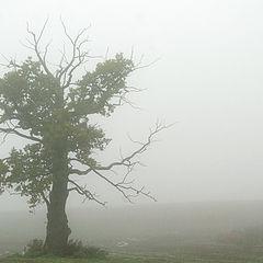 """фото """"... sunrise tree"""""""