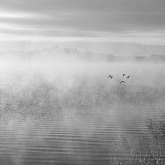 "фото ""Последние птицы улетели ..."""