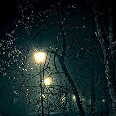 """фото """"Ночью в парке тихо..."""""""