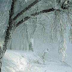 """фото """"Снежное царство."""""""
