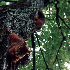 "photo ""squirrels"""