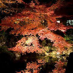 "фото ""Night Autumn"""