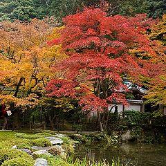 """фото """"Day Autumn"""""""