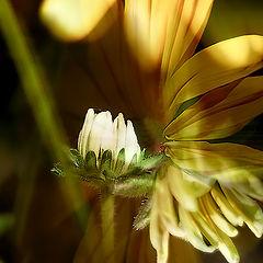 "photo ""Flowers!"""