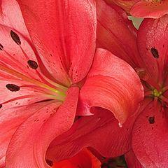 "фото ""Flowers 2"""